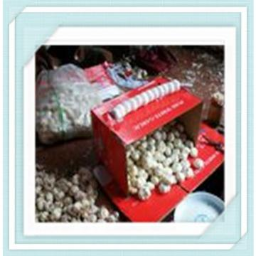 quality fresh garlic 2015 new garlic in 10kg mesh bag