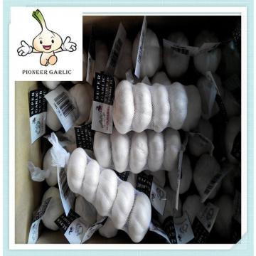 2015 Chinese Jinxiang origin Pure White garlic Hot sale Chinese Fresh Garlic producer
