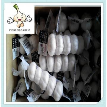 Chinese products wholesale fresh white garlic in cold storage