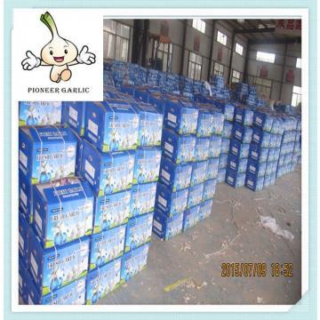 Chinese Natural Normal White Dry Garlic Exporter Pure White Garlic 5.5CM In 10Kg Carton
