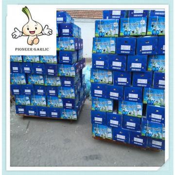 Fresh Normal White Garlic 4.5CM - Kuwait Garlic Shandong garlic supplier