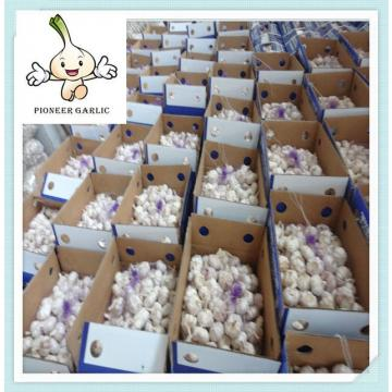 Shandong Fresh Normal White Garlic 5.0CM In 10Kg Carton For Haiti