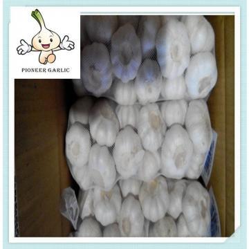 Jinxiang Top Quality Fresh Pure White Garlic 5.5CM In 10Kg Carton