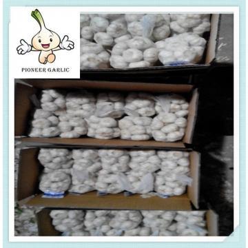 5.5CM Fresh Pure White Garlic In Mesh Bag Wholesale natural frozen garlic price