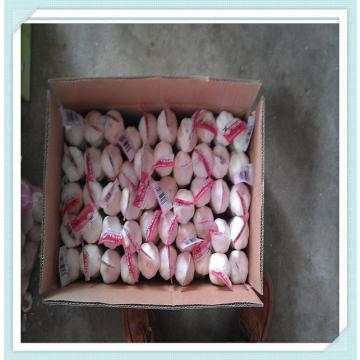 New Crop Jinxiang Fresh white Garlic in Carton or Mesh bags