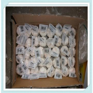 2015 new crop fresh red garlic price Jinxiang garlic 5.0cm natural garlic