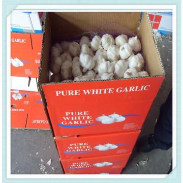 New fresh red garlic packed by carton or mesh bag Chile Alho