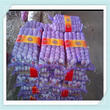 Red Garlic, Purple Garlic for Colombia, 10kg/bag or 10kg/carton