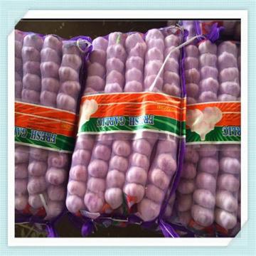 new crop fresh pure white garlic price in china from shandong