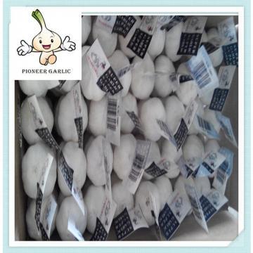 5.5cm fresh garlic natural white garlic 200G*50bag garlic fresh garlic 5P garlic