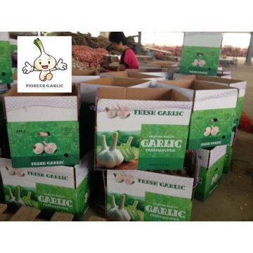 Normal White Garlic Chinese Natural Fresh Garlic in 10kg Box