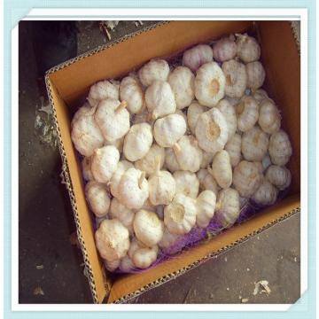 Fresh Garlic Supplier or Manufacturer for Fresh Garlic