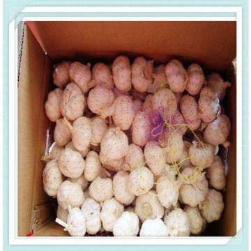 2015 crop Chinese jinxiang normal white garlic from cold store to colombia