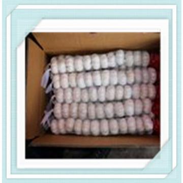 pure white garlic 2015 New Shandong Jinxiang garlic