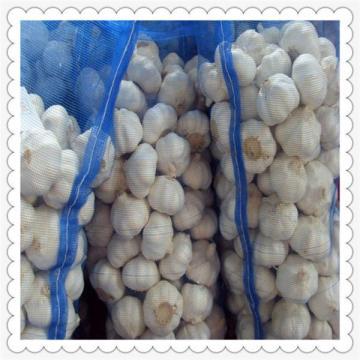 fresh garlic normal white 5cm for garlic paste in 20kg mesh bag