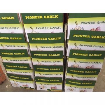 china garlic with lower price