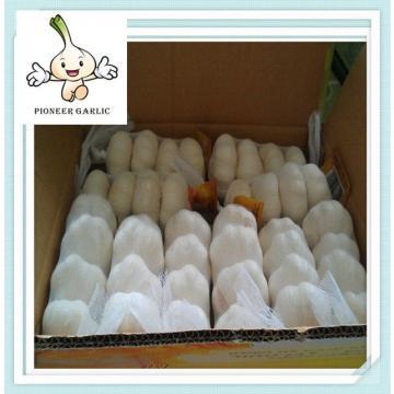 2015 hot sale fresh normal white dry garlic New cheapest garlic price