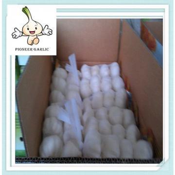 10kg Loose Carton Packing Carton Garlic Export 2015 White Fresh Garlic Price