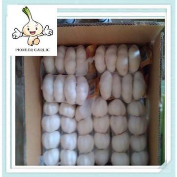 2015 Crop China Shandong Province fresh normal white garlic