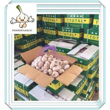 Normal white garlic of 10kg popular in the Middle East Market