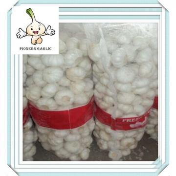 Wholesale garlic price,garlic exporters china Fresh white garlic in small mesh bag