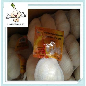 Beat quality china agriculture food stuff fresh garlic to Brasil Market