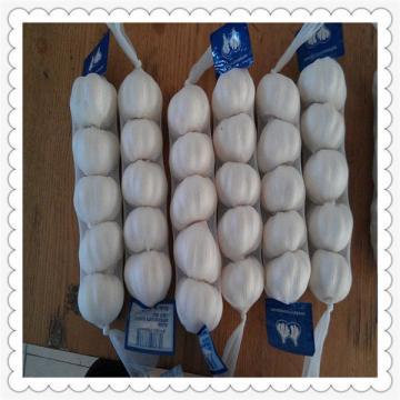 Chinese New Crop White Garlic Pure Shandong fresh Garlic