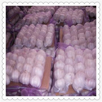 new crop fresh garlic Fresh garlic in small mesh bag in bag