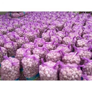 CHINA Origin Fresh Pure White Garlic New crop PURE white garlic