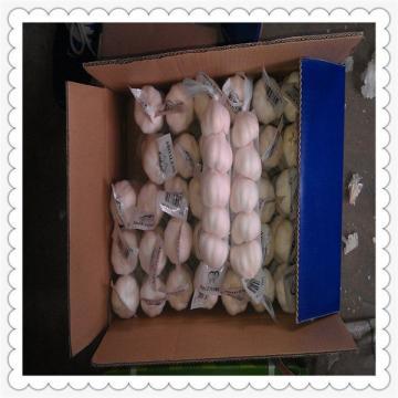 2015 New season red garlic,natural and from shandong