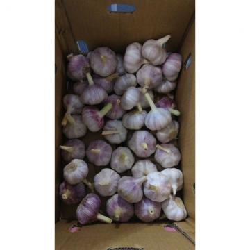 2018 New Crop Chinease Fresh Garlic, White Garlic, 4.5-6.5cm,Good Quality