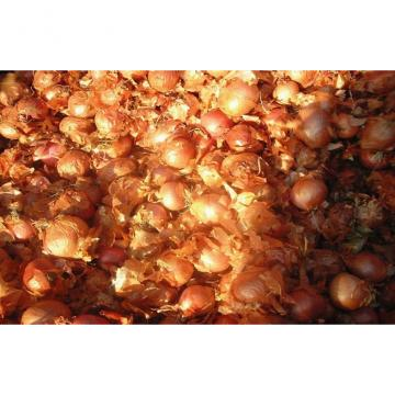 2cm - 5cm Yellow / Red Asian Shallots Round Containing Water , Sugar, spicy pure
