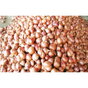 Non-Peeled Fresh Red Asian Shallot Contains Fibre , Anti-Inflammatory