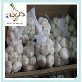 newest price Professional supplier fresh garlic new arrival normal white garlic