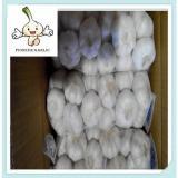 Hot sale fresh garlic Good Taste Cheap Prices!! best jinxiang factory garlic