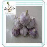 Fresh Pure White Garlic Wholesale Chinese garlic factory New Crop White Garlic