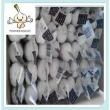 made in china certification appoved fresh garlic For BRASIL Market
