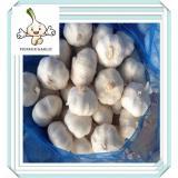 Sale Fresh Natural White Garlic From China 4.5cm fresh white garlic