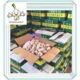 Wholesale High Quality Chinese Fresh Garlic Snow White Garlic 500g Bag