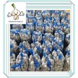 SHANDONG BEST NORMAL AND PURE WHITE FRESH GARLIC