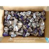 Chinese Fresh Jinxiang Pure White Garlic Small Packing In 10kg Box