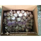 Chinese Natural 5cm Red Garlic Loose Packing In 10kg Box