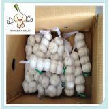 fresh new garlic/fresh red garlic in china (200g, 250g,500g,1kg)