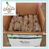 Chinese Fresh natural Pure White Garlic (3/4/5P Per Mesh bag Packing)