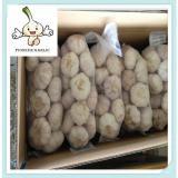 2016 China Fresh White Natural Garlic chinese garlic exporter from china