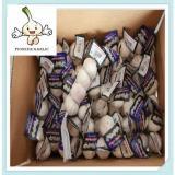 Wholesale White Garlic 10KG Carton 250g Basket Packing Solo Garlic for Sale