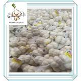 new corp Chinese fresh quality garlic chinese normal fresh white garlic 5.5cm