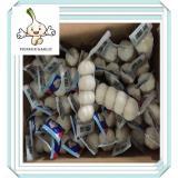 Super Snow White Garlic Jinxiang Red Garlic Purple Garlic 5.0cm 5kg Mesh Bag