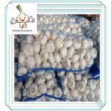 Jining Garlic For Sales 3P Chinese Garlic ( FACTORY, SIZES 5.0/5.5/6.0CM)