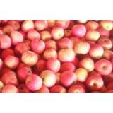 Tasty Red Fresh Fuji Apple Contains Phytochemicals For Apple Juice